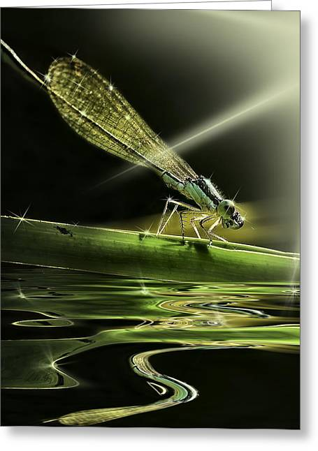 Damsel Dragon Fly  With Sparkling Reflection Greeting Card by Peter v Quenter