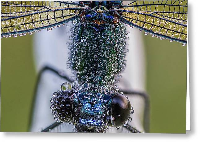 Damselfly With Drops Greeting Card