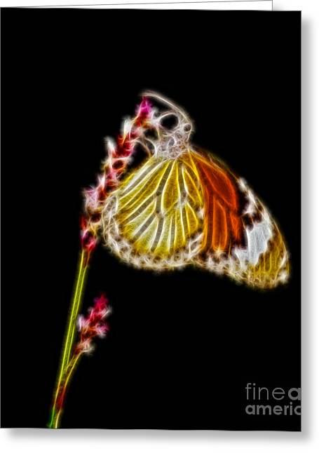 Danaus Genutia Butterfly Fractal Art Greeting Card