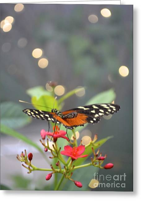 Dance Of The Butterfly Greeting Card by Carla Carson