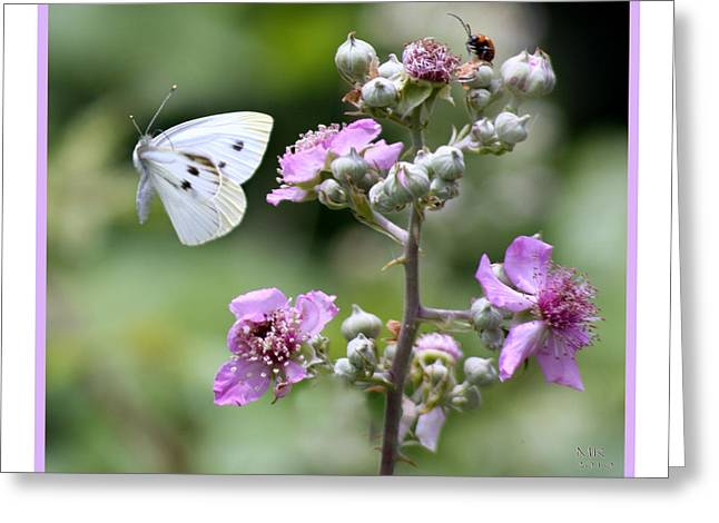 Dance Of The Butterfly Greeting Card by Martina  Rathgens