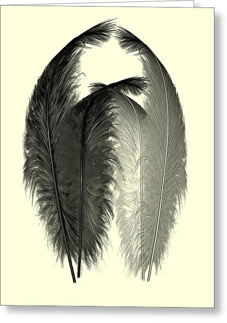 Dance Of The Feathers Greeting Card by David Dehner
