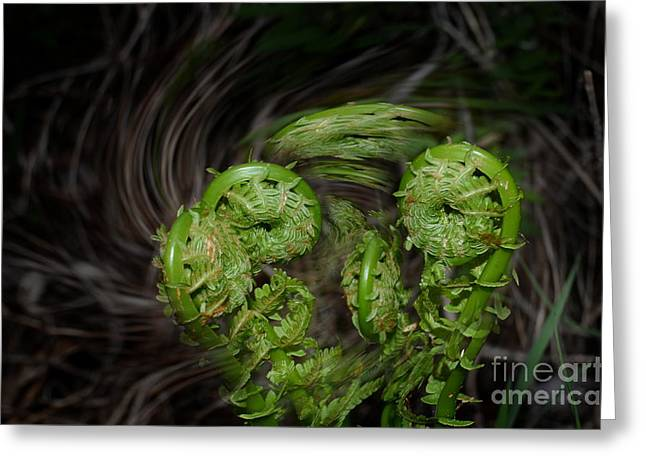 Dance Of The Fiddleheads Greeting Card by The Stone Age