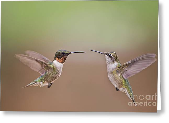 Dance Of The Hummingbirds Greeting Card by Bonnie Barry