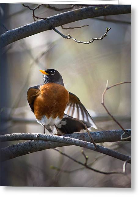 Dance Of The Robin Greeting Card by Annette Hugen