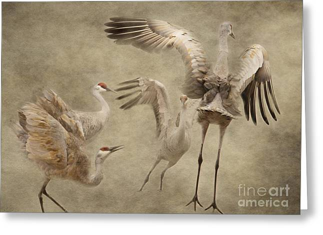 Dance Of The Sandhill Crane Greeting Card