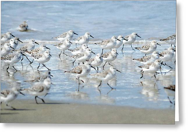 Dance Of The Sandpipers Greeting Card