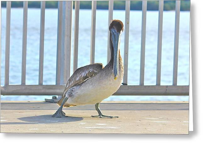 Dancing Brown Pelican Greeting Card by Lorna Maza
