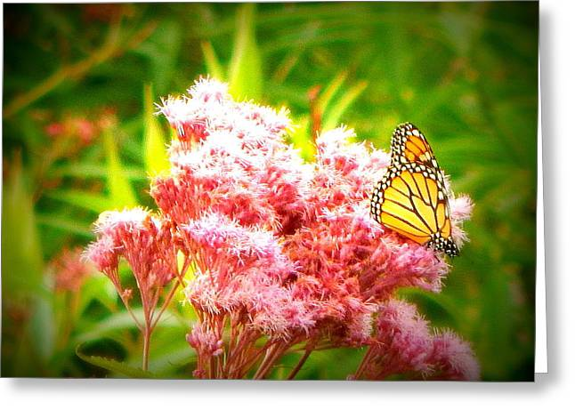 Dancing Butterfly Greeting Card