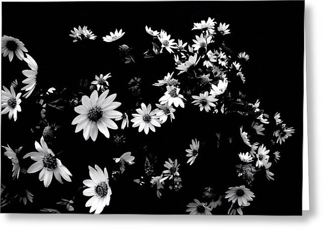 'dancing Daisies' Greeting Card