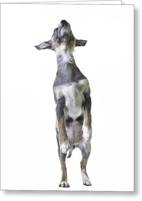 Dancing Dog Greeting Card by Edward Fielding