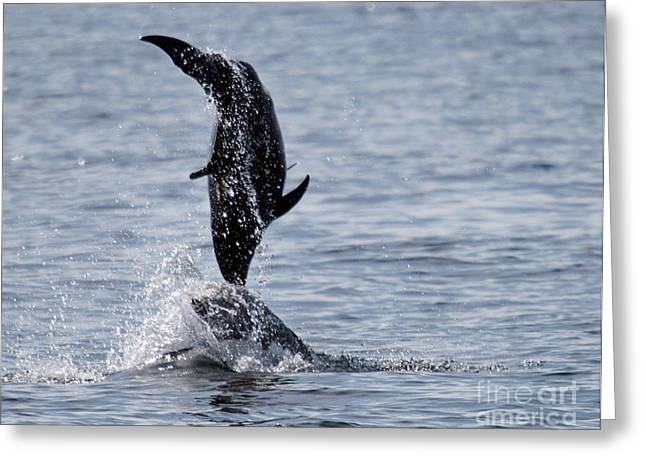 Dancing Dolphins Greeting Card by Bob Hislop