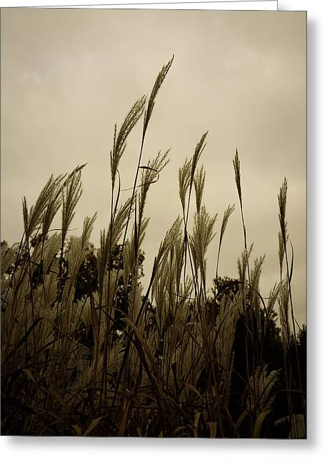 Dancing Grass Greeting Card