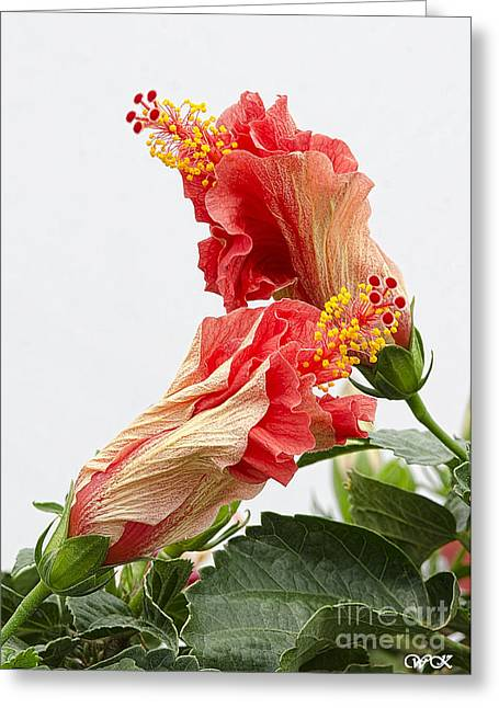 Dancing Hibiscus Greeting Card by Wanda Krack
