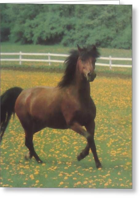 Dancing  Horse Greeting Card by Pat Mchale