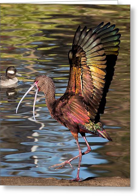 Dancing Ibis Greeting Card
