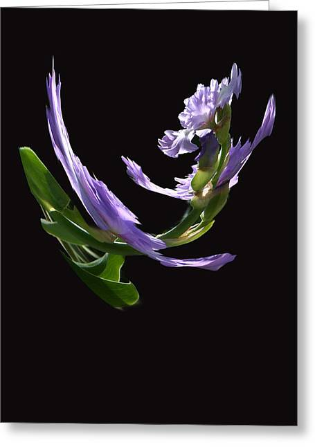 Dancing Iris 2 Greeting Card