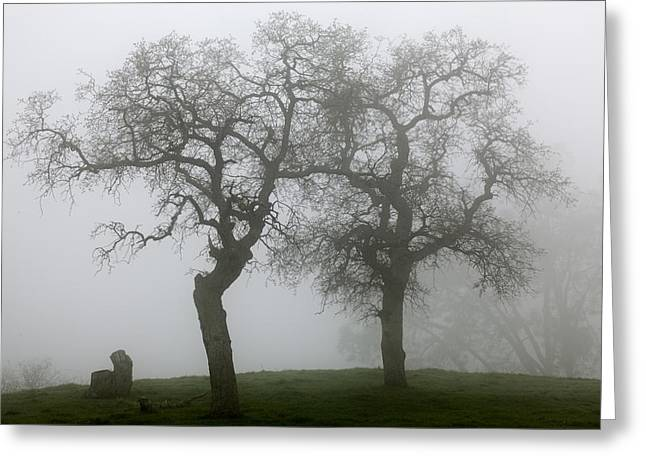 Dancing Oaks In Fog - Central California Greeting Card