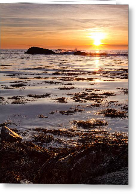 Dancing On The Tide Greeting Card by Jeff Sinon