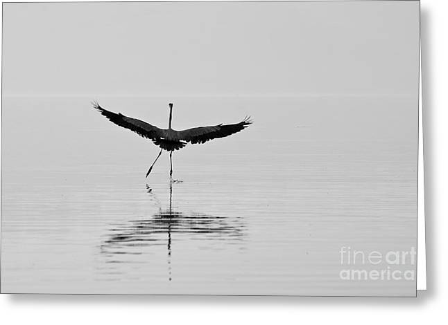 Dancing On The Water Greeting Card by Jay Nodianos
