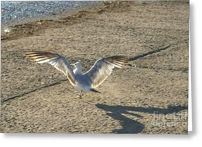 Dancing Seagull Greeting Card