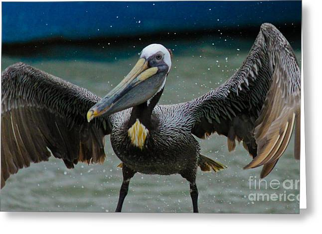 Dancing With A Pelican Greeting Card