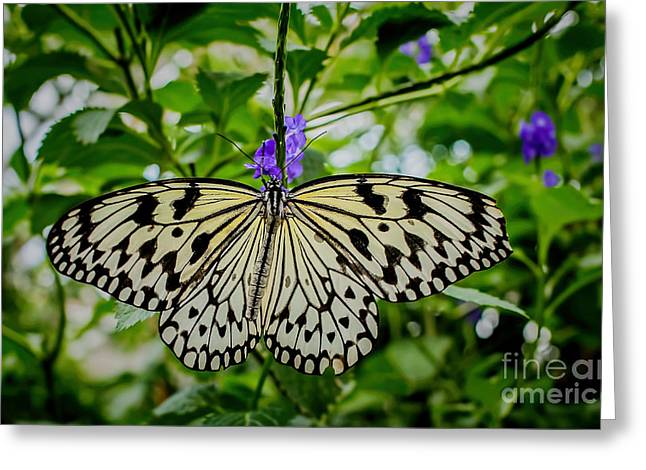 Dancing With Butterflies Greeting Card by Jon Burch Photography
