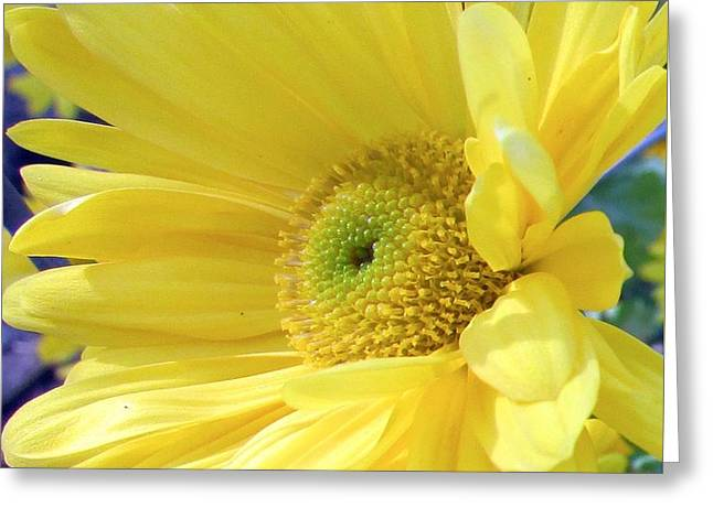 Mum In The Sun Greeting Card by Nancy Rucker