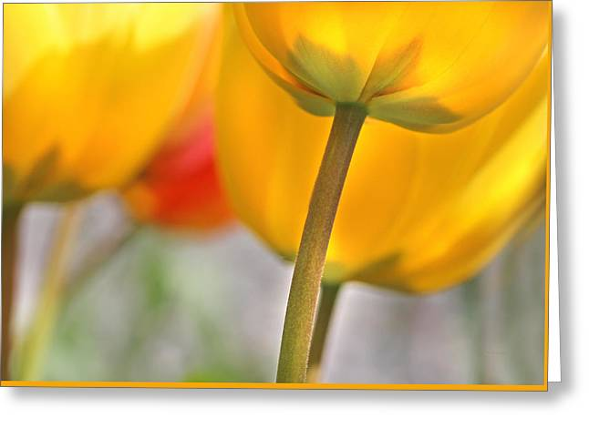Dancing Yellow Tulip Flowers Greeting Card by Jennie Marie Schell