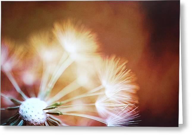 Dandelion - Fire Greeting Card