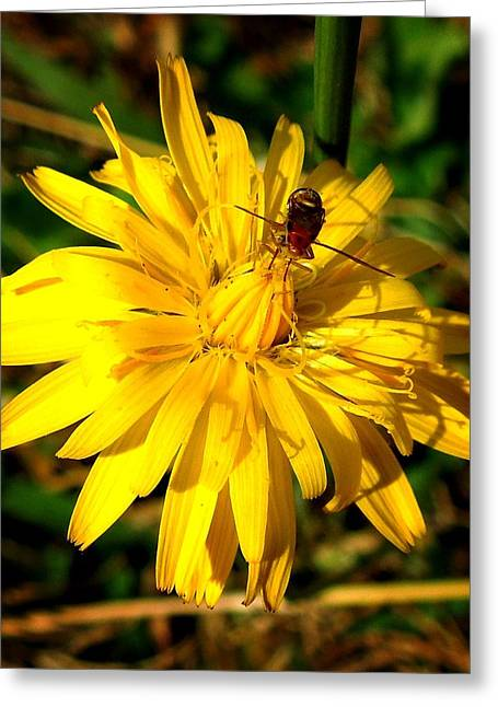 Dandelion And Bug Greeting Card by Pete Trenholm