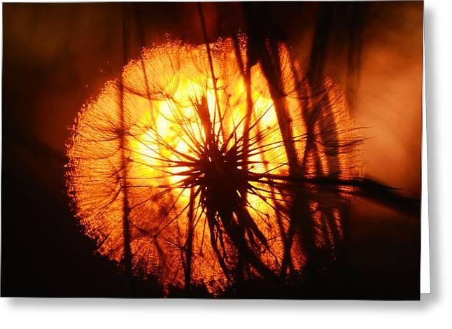 Dandelion At Sunset Greeting Card