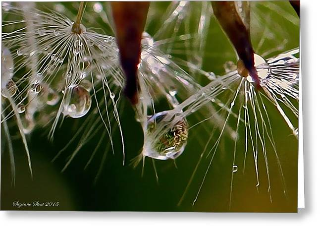 Dandelion Droplets Greeting Card