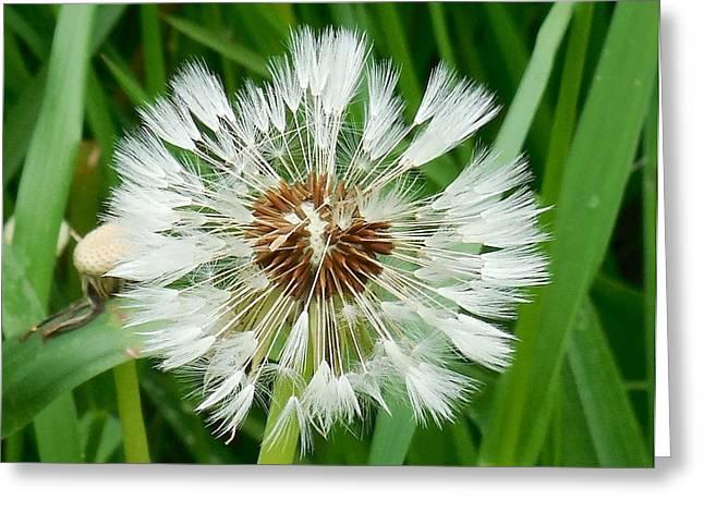 Dandelion Fluff Greeting Card