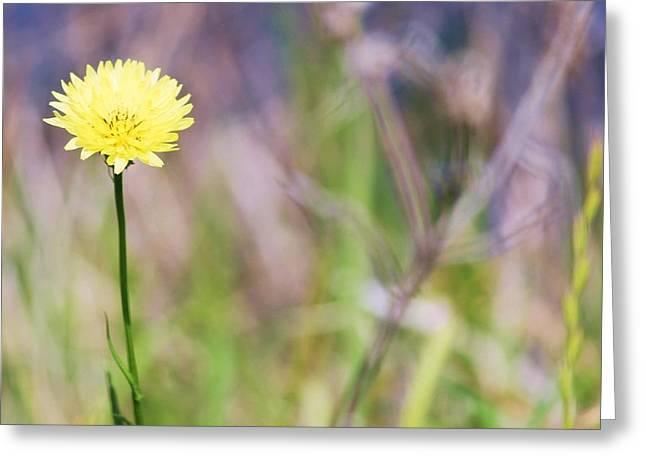 Dandelion Greeting Card by Lorri Crossno
