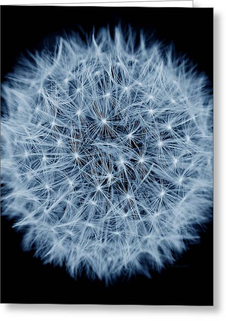 Dandelion Macro Abstract Midnight Blue Greeting Card by Jennie Marie Schell