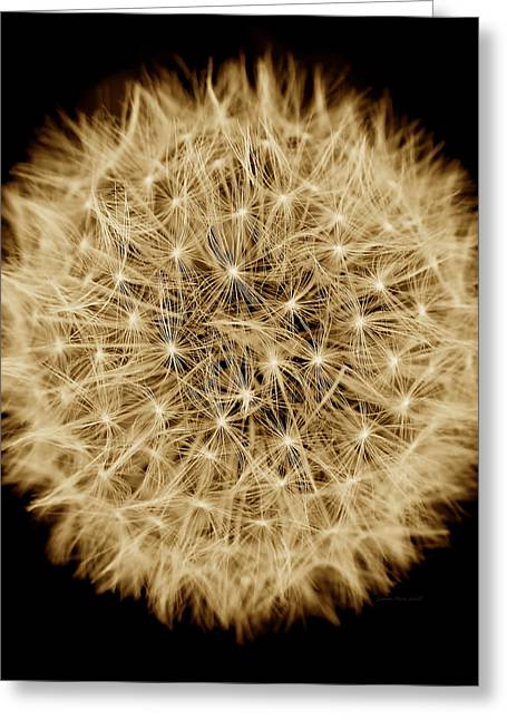 Dandelion Macro Abstract Sepia Brown Greeting Card by Jennie Marie Schell