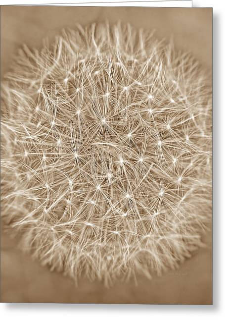 Dandelion Marco Abstract Brown Greeting Card