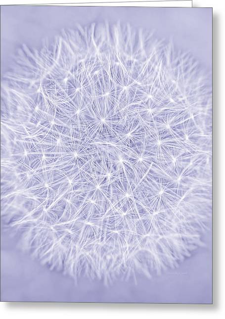 Dandelion Marco Abstract Lavender Greeting Card by Jennie Marie Schell