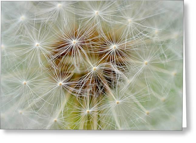Dandelion Matrix Greeting Card