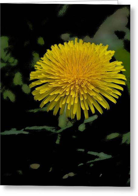 Dandelion Pla 529 Greeting Card