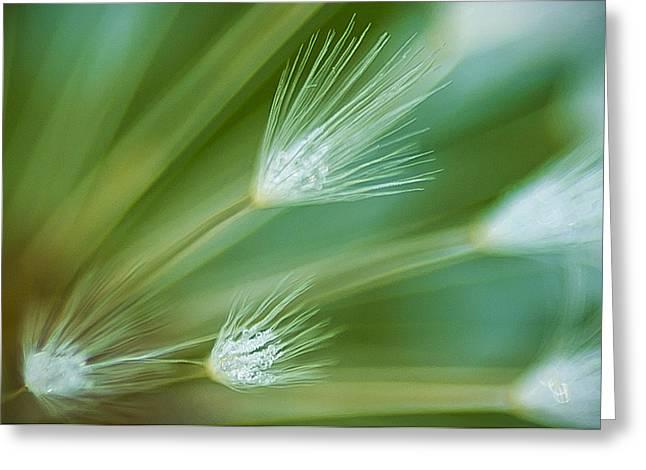 Dandelion Plume Greeting Card