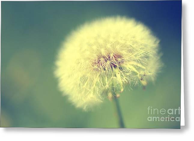 Dandelion Seed Head Greeting Card by Karen Slagle
