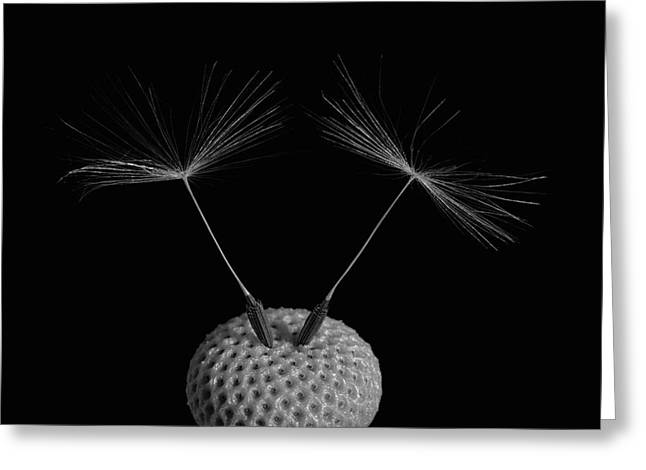 Dandelion Seeds  Waterloo, Quebec Greeting Card by David Chapman