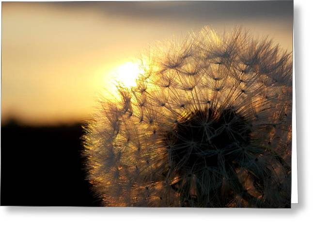 Dandelion Sunset Greeting Card