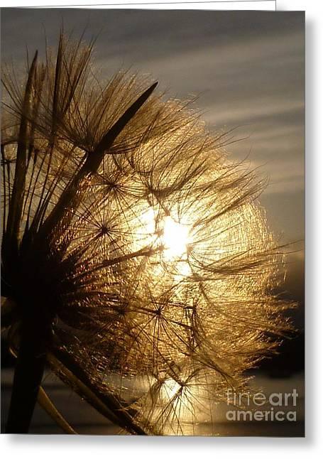 Dandelion Sunset Greeting Card