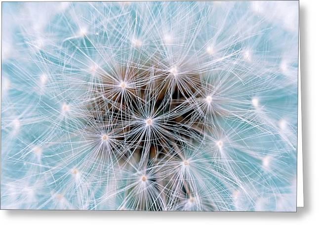 Dandelion (taraxacum Officinale) Seedhead Greeting Card by Bildagentur-online/mcphoto-schulz