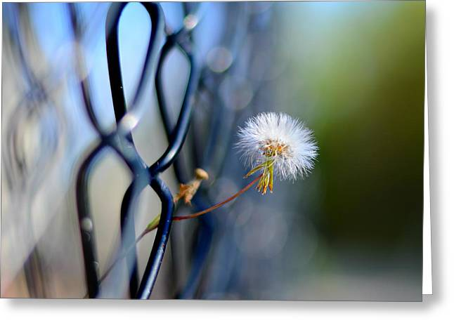 Dandelion Wish Greeting Card by Laura Fasulo