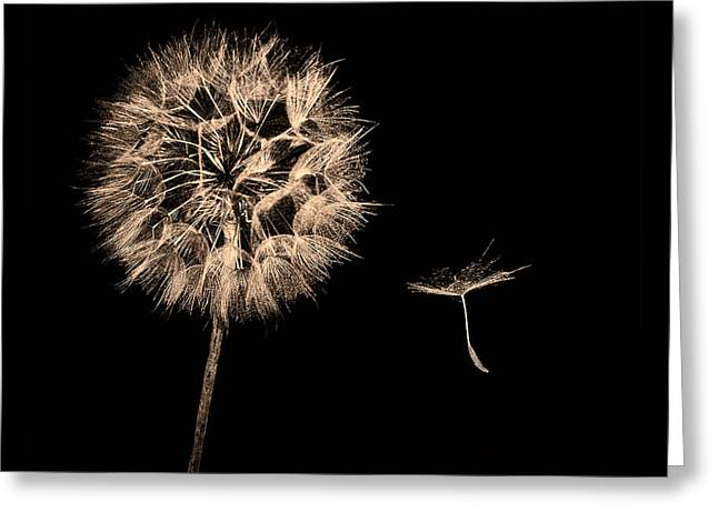 Dandelion With Seed Greeting Card