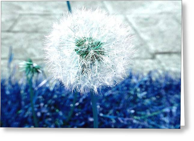 Greeting Card featuring the photograph Dande Clock Blue by Laurie Tsemak